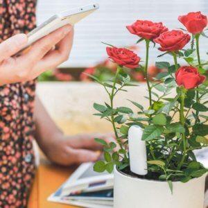 Xiaomi Smart Flower pot